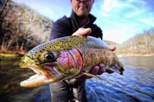 Fish up close angled